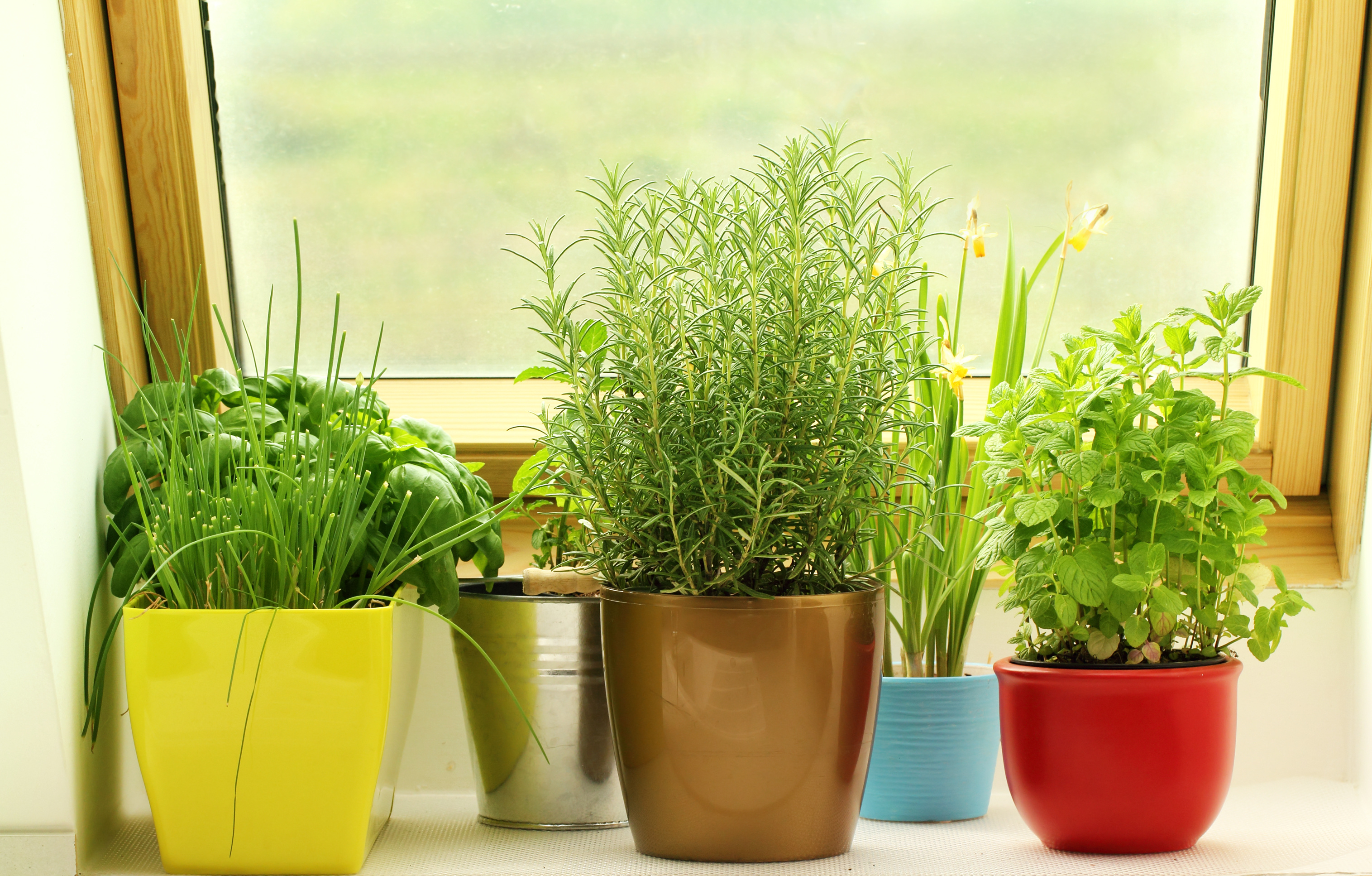 Save Money: Grow Your Own Herbs - Sela Investments : Sela Investments